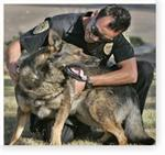 Police & Military Dogs