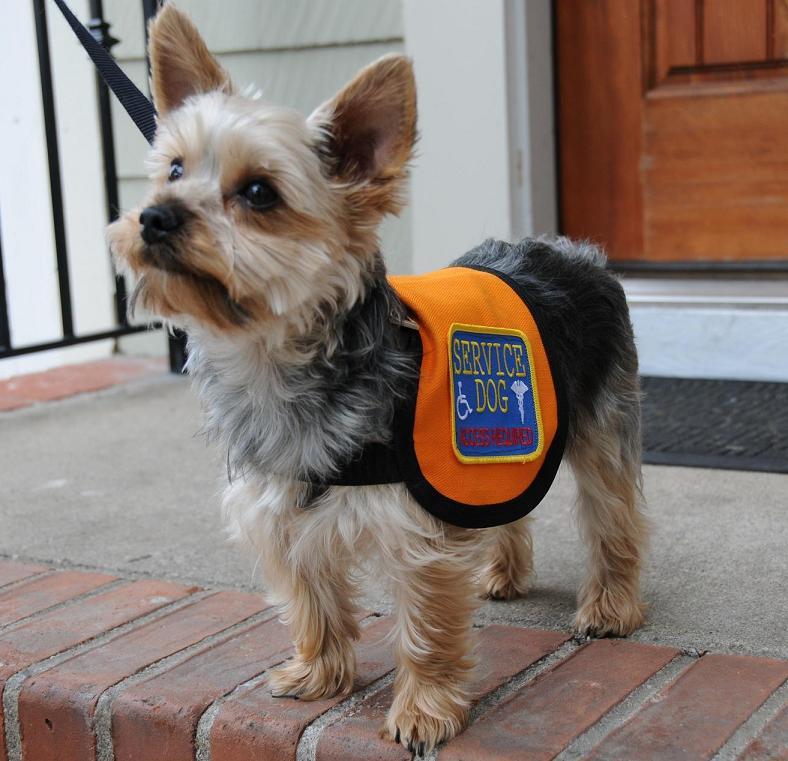 Service Dog Gear Service Dog Vest
