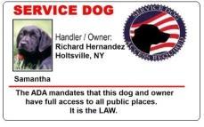 U S Service Dog Identification Card