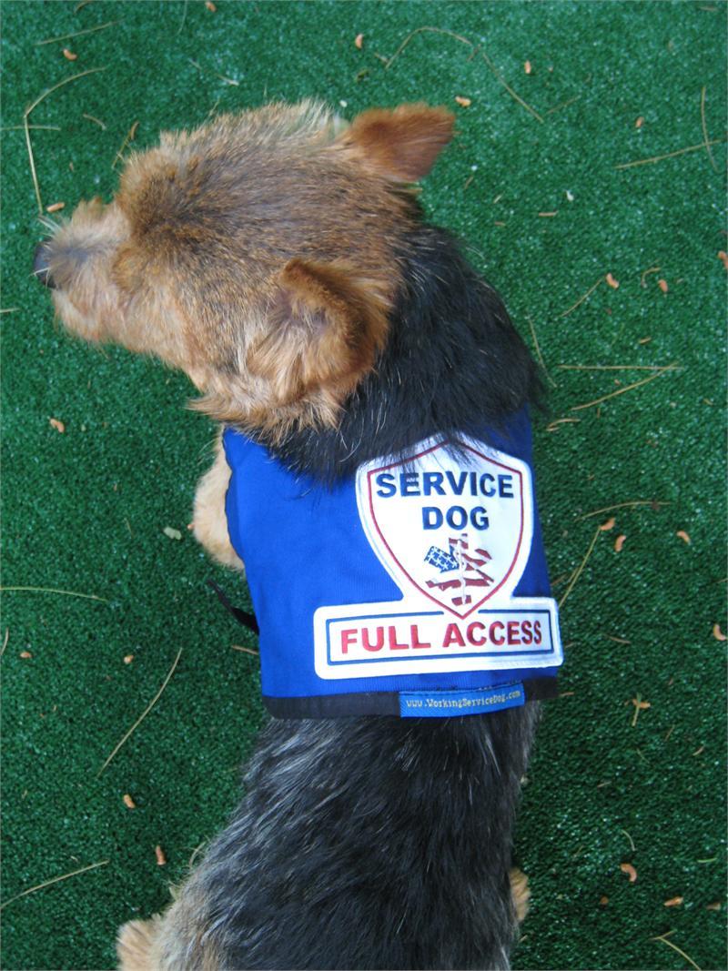 Service Dog Gear Premium Small Service Dog Vest